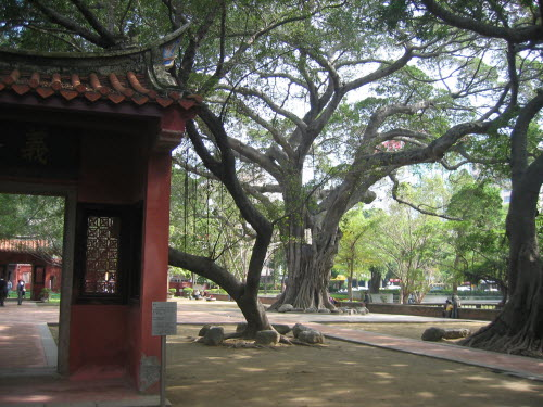 Giant Banyan Tree in Confucius Temple, Tainan