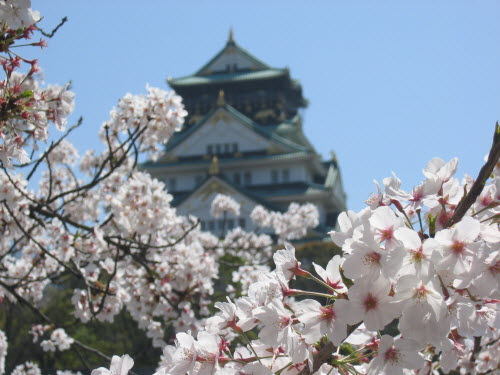Osaka Castle with cherry blossoms in foreground, Apr 9, 2004