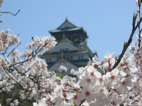 Osaka castle during cherry blossom 2, Apr 9, 2004