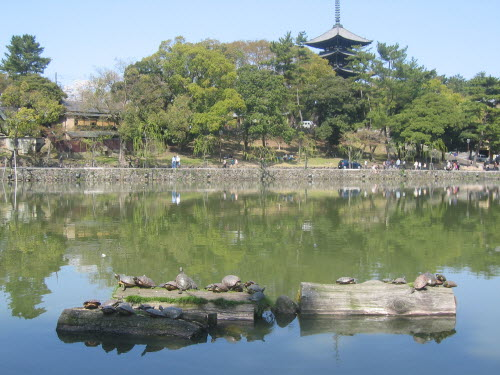 Turtles in Nara in front of pagoda, Apr 9 , 2005